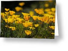 Springtime Poppies  Greeting Card