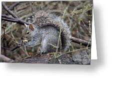 Squirrel With Peanut Greeting Card
