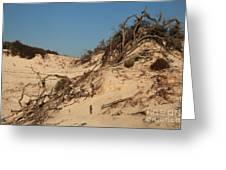 St Joseph Sand Dunes Greeting Card