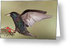 Stanley The Starling Greeting Card