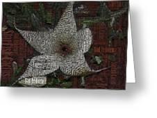 Star Fish Cactus  Greeting Card