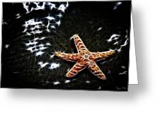 Star Fish Greeting Card