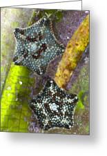 Starfish On Neptune Grass Greeting Card
