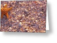 Starfish On The Beach, Lovers Key State Greeting Card