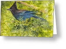 Stellar Jay Greeting Card by Ruth Glenn Little