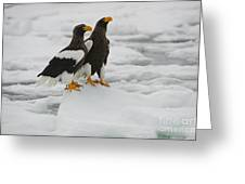Stellers Sea Eagles Greeting Card