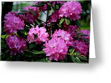 Still Life At North Puffin - Rhododendron With Butterfly Greeting Card