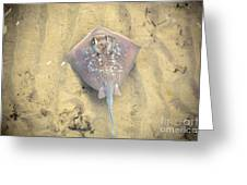 Stingray Greeting Card