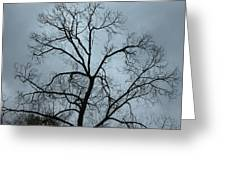 Stormy Trees Greeting Card