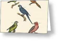 Strange Climbing Birds Greeting Card