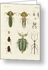 Strange Insects Greeting Card