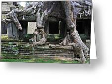 Strangler Fig Tree Roots On Preah Khan Temple Greeting Card