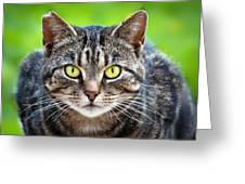Stray Cat Stare Greeting Card