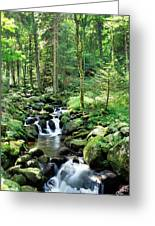 Stream Flowing Through A Forest, Usa Greeting Card