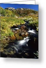Stream In Mountain Greeting Card