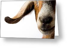 Studio Portrait Of A Mixed-breed Goat Greeting Card