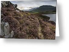 Stunning Sunrise Panorama Landscape Of Heather With Mountain Lak Greeting Card