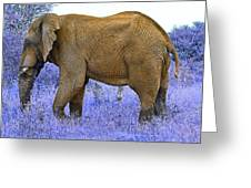 Styled Environment-the Modern Elephant Bull Greeting Card