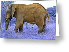 Styled Environment-the Modern Elephant Bull Greeting Card