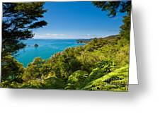 Subtropical Forest Of Abel Tasman Np In New Zealand Greeting Card