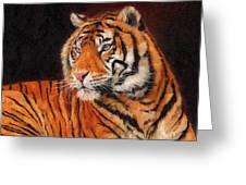 Sumatran Tiger Greeting Card by David Stribbling