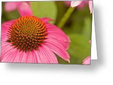 Summer Cone Greeting Card