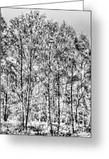 Summer Forest Trees Greeting Card
