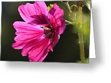 Summer Impressions Greeting Card