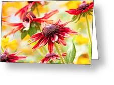 Summer Soltice Greeting Card