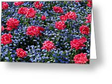 Sun-drenched Flowerbed Greeting Card