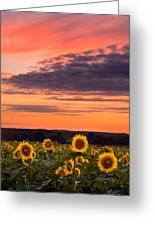 Sun Over Sun Greeting Card