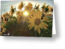 Sun Peaking Greeting Card by Janet Moss
