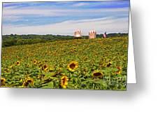 Sunflower Field New Jersey Greeting Card