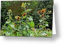 Sunflower Garden Greeting Card by Annette Allman