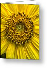 Sunflower In Oil Paint Greeting Card