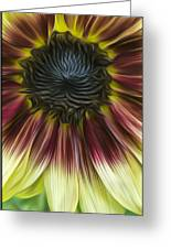 Sunflower In Oils Greeting Card