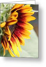 Sunflower Named The Joker Greeting Card