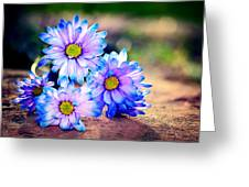 Sunset Flowers Greeting Card by Tammy Smith