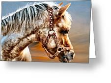 Sunset Pony Greeting Card