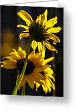 Sunshine On My Shoulders Greeting Card