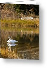 Swan And Boat Greeting Card