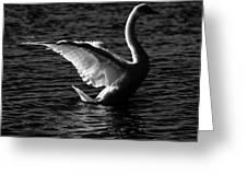 Swan Wingspan Greeting Card