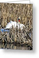 Swanly Greeting Card
