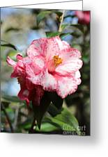Sweet Camellia Greeting Card