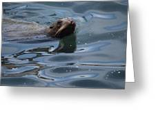 Swimming Sea Lion Greeting Card