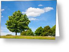 Sycamore  Acer Pseudoplatanus Greeting Card