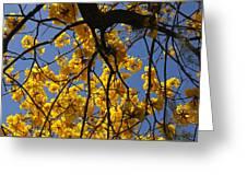 Tabebuia Tree Blossoms Greeting Card