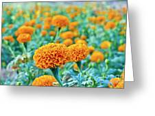 Tagetes Erecta / Aztec Marigold Flower Greeting Card