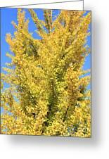 Tall Ginkgo Tree Greeting Card