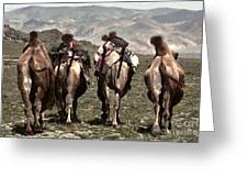 Working Camels Greeting Card